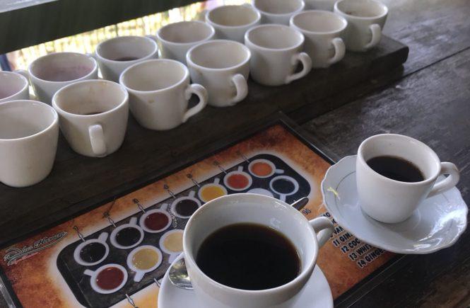ウブド 観光 おすすめコース ジャコウネココーヒー