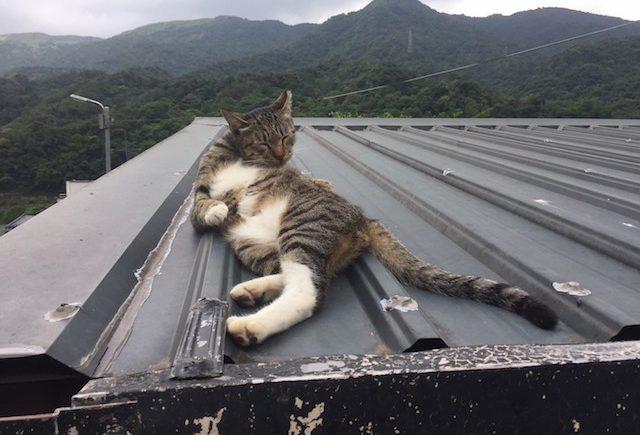 台湾 猫村 滞在時間