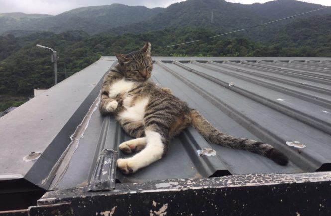台湾の猫村 猴硐 アイキャッチ