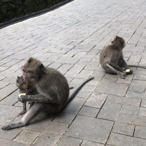 モンキーフォレスト 猿 親子